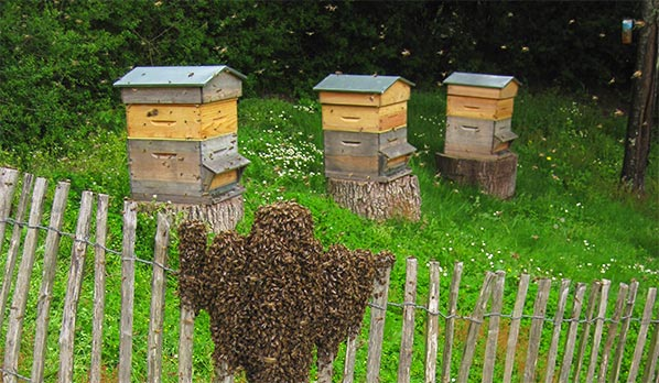 des ruches dans les espaces verts espaces verts. Black Bedroom Furniture Sets. Home Design Ideas